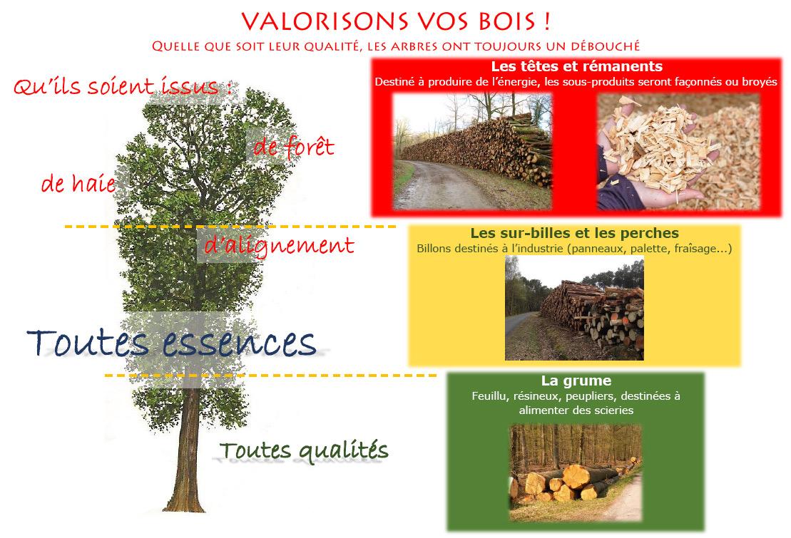 Exploitation foresti re bne bois n goce nergie - Coupe de bois de chauffage sur pied a vendre ...